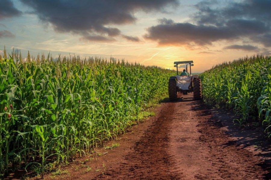 Governo adota medidas para desburocratizar o acesso ao crédito rural