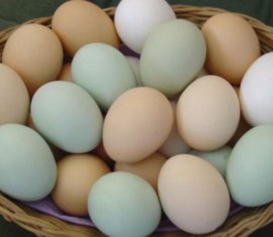 Ovos da raça índio gigante podem ser comercializados por até R$ 120,00 a dúzia em Rondônia